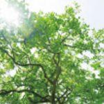 「森林再生ターニーハウス」プロジェクト