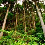 2024年日本の森は変わるか