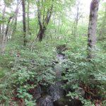 清里の森270万円 遊び心がくすぐられる小川付き土地