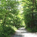 森の見立て方