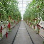 ハウス栽培で副業、の可能性