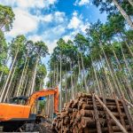 今こそ、林業を育てる好機